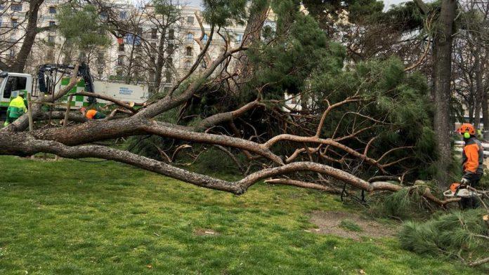 Madrid: Fallece un niño de 4 años tras caerle un árbol encima en el parque de El Retiro