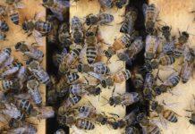 """Madrid: hombre, en estado grave tras sufrir """"varias picaduras"""" de abejas"""