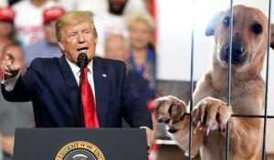 Donald Trump convierte el maltrato animal en delito