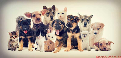 Sergio Rico Ayala lanza su Blog oficial de Animales