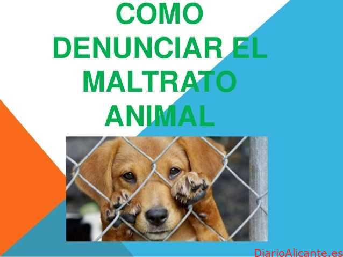 ¿Cómo Denunciar el Maltrato Animal?