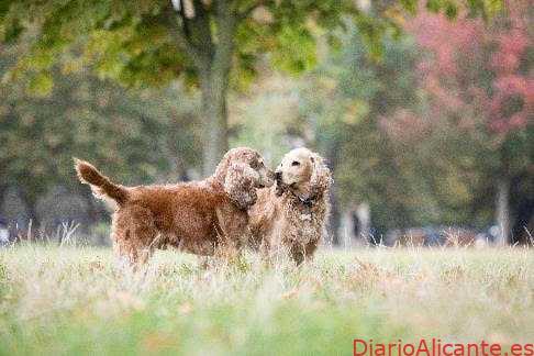 Cuida de tu mascota respetando al medioambiente