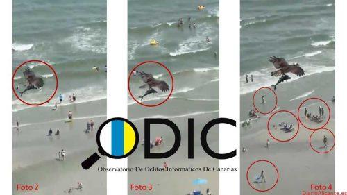 ¿Real o fake? El vídeo viral del águila que atrapó a un tiburón, en entredicho por ODIC