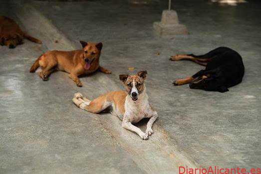 """la campaña solidaria que denuncia el abandono animal en la """"nueva normalidad"""""""