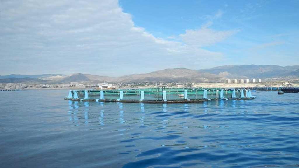 El Ayuntamiento emite varios informes desfavorables al proyecto de ampliación de la piscifactoría de la Vila