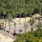 Han replantado las once palmeras que faltaban en la plaza de La Viña