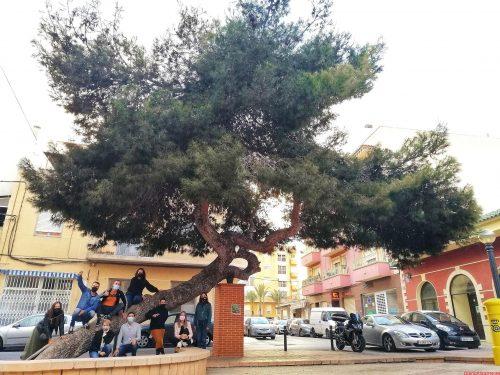 EL 'PINO DE LA BAIA' QUEDA EN TERCER PUESTO EN EL CONCURSO DEL ÁRBOL DEL AÑO ESPAÑOL