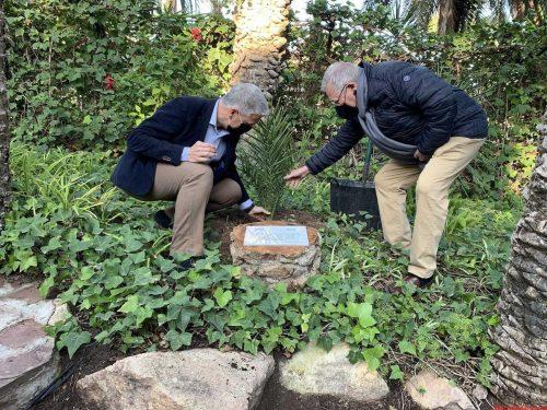 Los clubes rotarios de Elche plantan una palmera en el XX aniversario de la declaración UNESCO