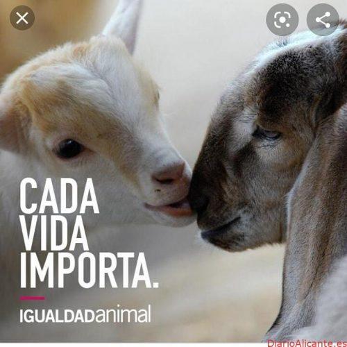FUNDACIÓN IGUALDAD ANIMAL SIGUE CONSIGUIENDO LOGROS PARA LOS ANIMALES