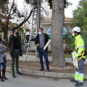 Novelda instala una treintena de cajas refugio de murciélagos para ayudar en el control de plagas de insectos