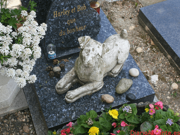 Ciudadanos propone crear un jardín-cementerio municipal de mascotas en Petrer