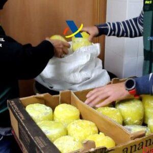 """Desarticulada una organización criminal que introducía en España cocaína en el interior de piñas """"preñadas"""""""