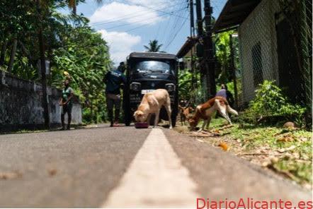 Día del Perro Callejero En España se abandona un perro cada 5 minutos