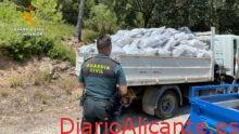 Incautado el mayor número de plantas de marihuana en la provincia de Valencia