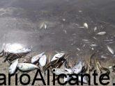 Miles de Peces Muertos cada día en Murcia