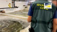La Guardia Civil interviene 16 toneladas de moluscos