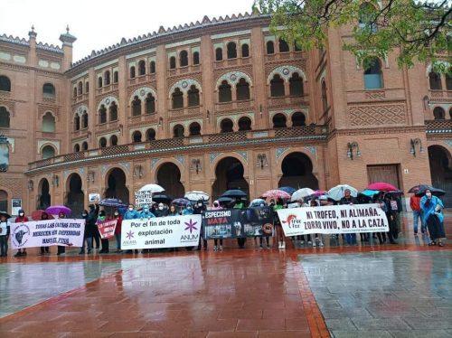 Nuevo éxito antitaurino en Madrid a pesar de la lluvia