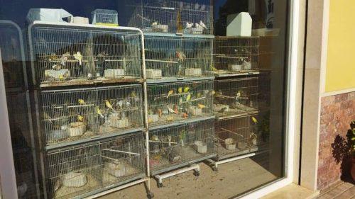 PACMA muestra precaución ante la futura ley de protección Animal